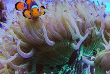 ✩ Zoutwater aquarium