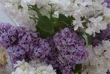 Fleurs à contempler et à partager
