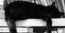 • ANIMALS [CATS] | Black Cats