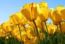 wiosna / kwiaty