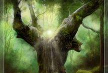 Tree Wisdom and Beauty