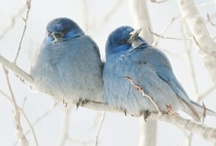 Feathered friends <3