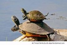 Turtles And Tortoises Are Fabulous / by Ellie Meehan