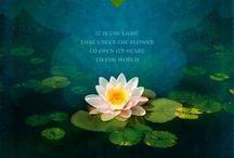 Lotus / No mud no Lotus