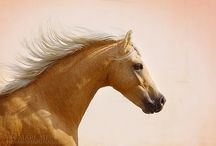 Pretty Ponies / by Audrey Sturner