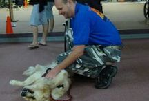 Service Dogs Helping Veterans / Mobility, PTSD, Emotional Support!  Our dogs make a difference in the lives of veterans reintegrating into family and civilian life.
