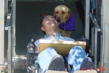 Service Dogs and Those They Help / Service dogs change lives.  They bring love, independence, security, and comfort.  In return, these dogs become a family member.
