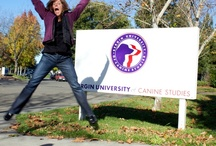 Bergin University Students and Dogs / Begin University of Canine Studies is the only accredited university in the world to provide degrees in Canine Studies!  Located in beautiful Sonoma County, California.