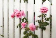~Fences & Gates~