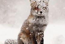 Wonderlijke Winter Wereld
