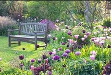 """Perennial and bulb combinations / """"I was just sitting here enjoying the company. Plants got a lot to say, if you take the time to listen."""