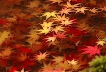 Fall / Fall is a second spring when every leaf is a flower. ~Albert Camus