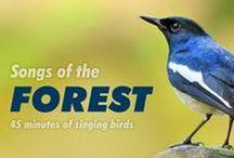 Bird songs- videos