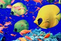 Colorfull fishes