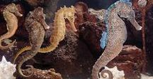 Seahorses / When seahorses find a mate, they wrap their tails around each other so the tide doesn't drift them apart. They have that one mate for the rest of their lives. When the mate dies, they do too