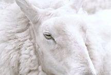White / Pure