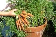 GARDENING ON THE BALCONY / Gardening