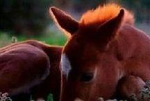 Hevoset / Kauniita hevoskuvia