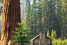 ⋘ Sequoia National Park ⋙