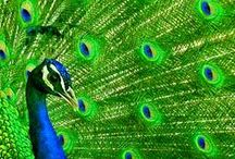 blue and green / Blue and green stuff / by Roise
