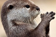 Animal ♞ Otters