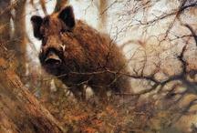 Animal ♞ Boars