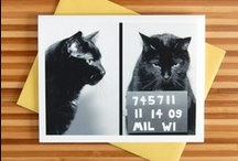 Cats / Fine felines!