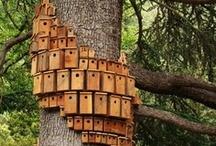 garden_special houses&feeders