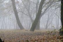 Ködös nap / Kirándulás egy ködös novemberi napon