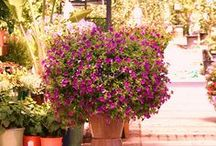 Beautiful plants / Plant ideas for landscaping