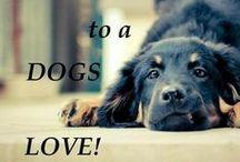 Lezioni per cani