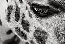 Animali: Beautiful