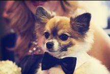 Wedding: Pets