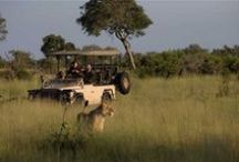 Botswana / The ultimate guide to Botswana   Best places to go to   Things to see   Where to stay