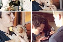 Big puppies with real puppies