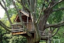 terrific treehouse / live like an ewok