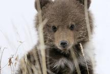 Bears,Bears& more Bears. / by Denise Evans
