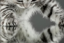 Cats, cats .... large and small / by Carmen Zerr