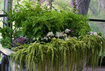 Dream Garden. / by Emily Graff