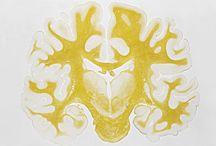 Neuroscience / by Laís Vilasbôas