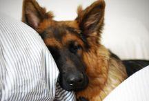 Pups / by Mary Elizabeth Wheeler