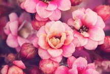 Flowers / Beautiful flowers and gardens