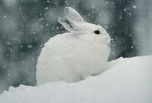 Winter / Winter scenes