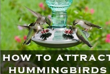 All About Birds / Pretty things related to birds