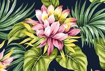 Flores, muitas cores / by Mariana Esteves