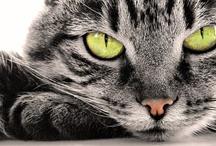 No Cat, No Life x