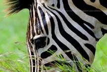 Wild & Cute Animals