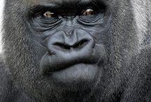 Primates / by Evonne Sisler