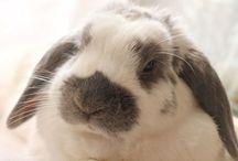 Willy / Il mio coniglietto ..