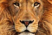 Animals ..(v celej kráse)